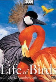 The Life of Birds (Dizi)